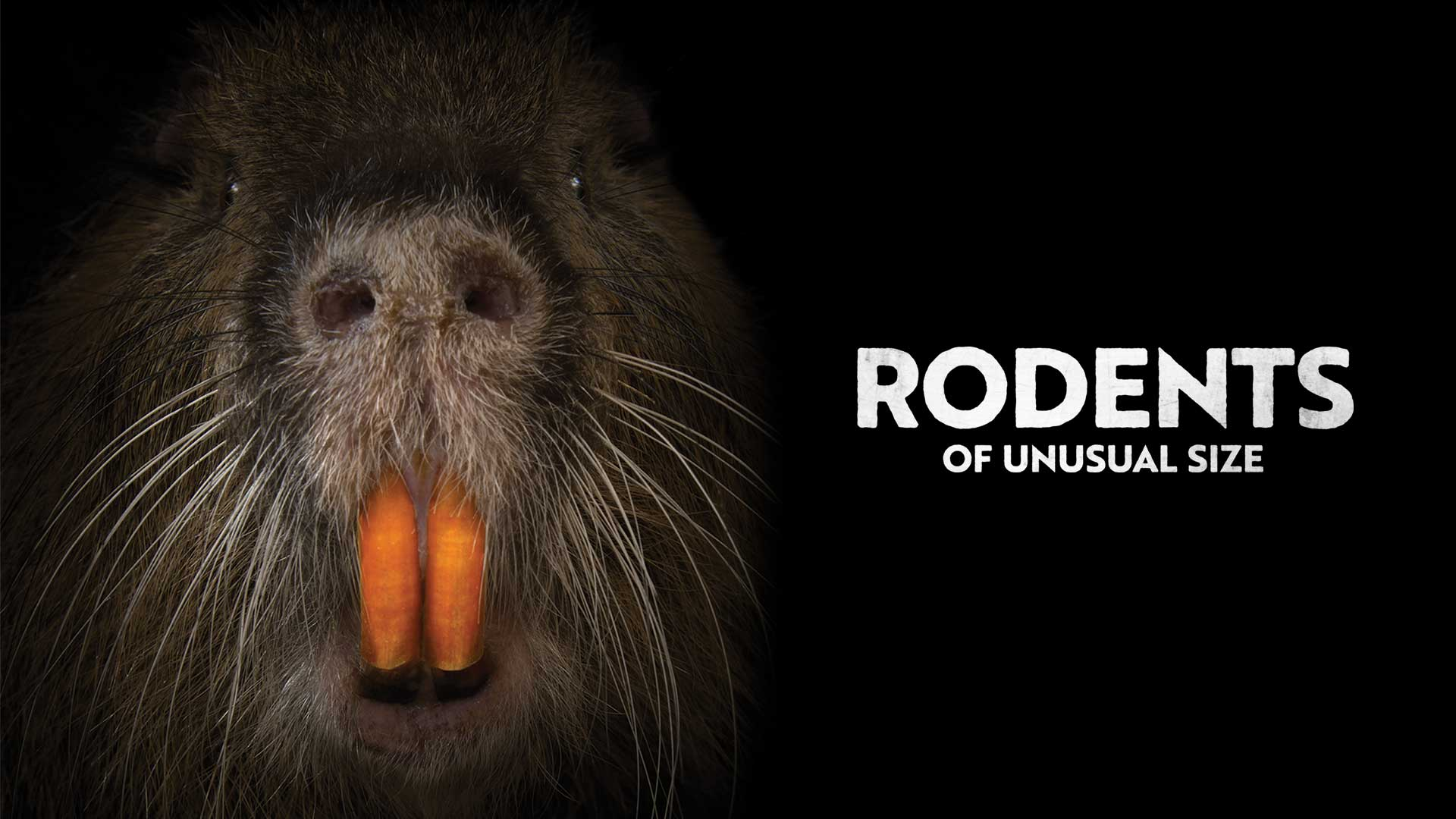 Rodents of Unusual Size - image