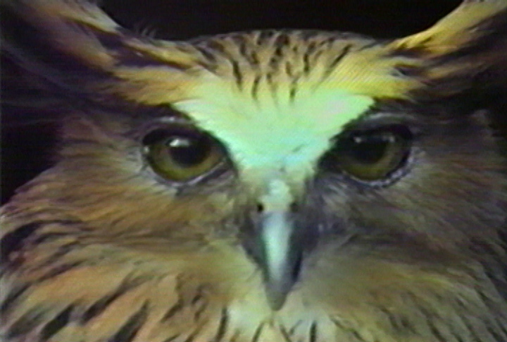 Chris Marker's Bestiary: An Owl is an Owl is an Owl - image