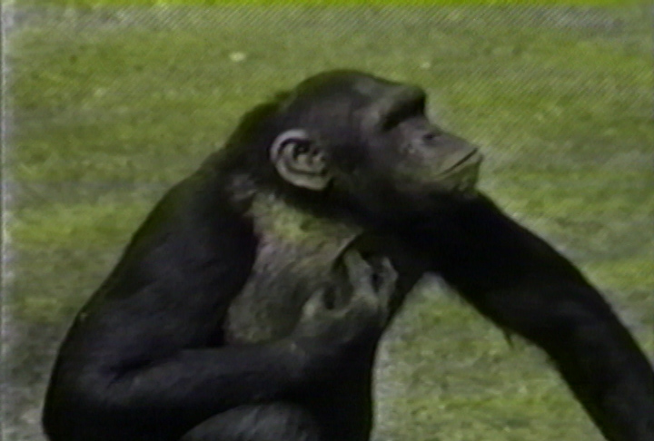 Chris Marker's Bestiary: Zoo Piece - image