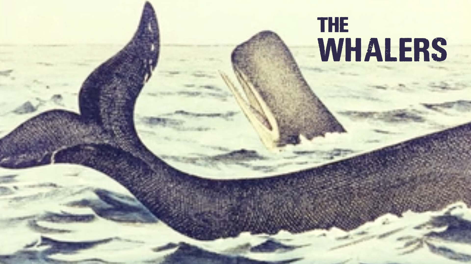 The Whalers - image